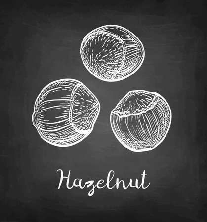 Chalk sketch of hazelnut.
