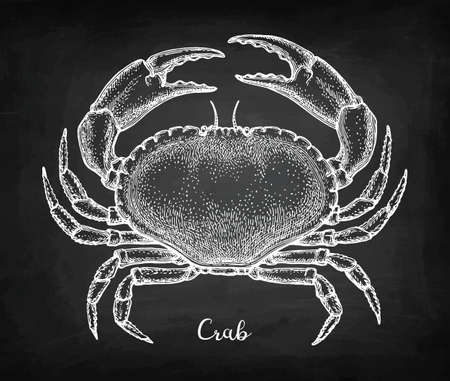 Chalk sketch of brown crab on blackboard background. Hand drawn vector illustration of cancer pagurus. Retro style. Illustration