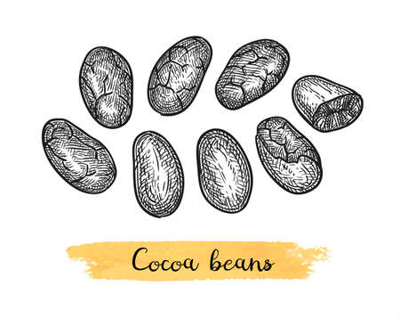 Cocoa beans. Ink sketch isolated on white background. Hand drawn vector illustration. Retro style. Illustration