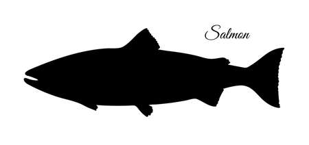 Silhouette of salmon. Hand drawn vector illustration of fish isolated on white background. Retro style. Stock fotó - 110278585
