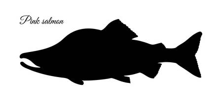 Silhouette of pink humpback salmon. Hand drawn vector illustration of fish isolated on white background. Retro style.
