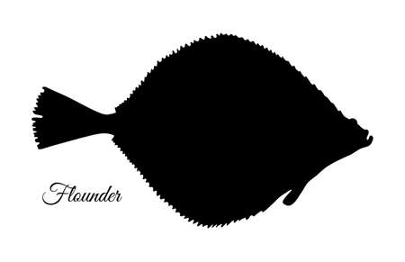 Flatfish. Silhouette of flounder. Hand drawn vector illustration isolated on white background.