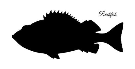 Silhouette of rockfish. Hand drawn vector illustration of redfish isolated on white background.  イラスト・ベクター素材