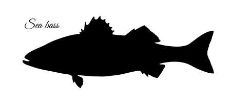 Silhouette of sea bass. Hand drawn vector illustration of fish isolated on white background.