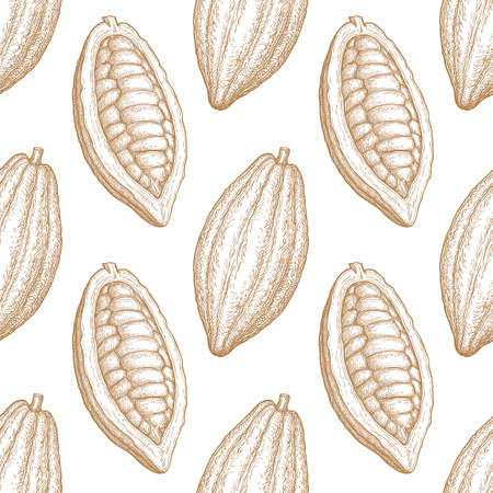 Seamless pattern with cocoa fruits. Hand drawn vector illustration. Retro style ink sketch.