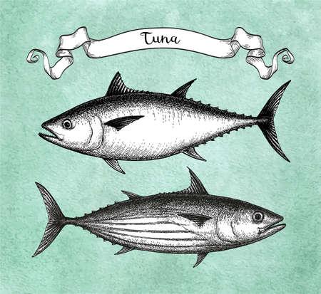Croquis à l'encre de bonite et de thon rouge de l'Atlantique. Illustration vectorielle dessinés à la main de poisson sur fond de papier ancien. Style rétro. Vecteurs