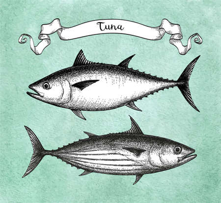 Ink sketch of Skipjack and Atlantic bluefin tuna. Hand drawn vector illustration of fish on old paper background. Retro style. Vettoriali