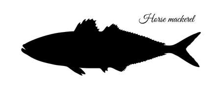 Silhouette of horse mackerel. Hand drawn vector illustration of fish isolated on white background.