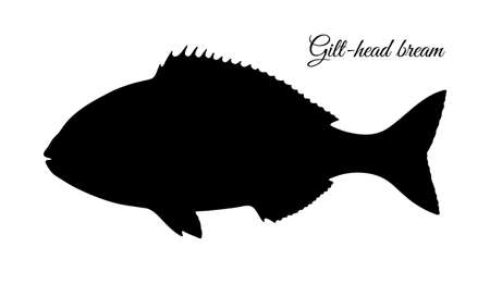 Silhouette of gilt-head sea bream. Reklamní fotografie - 108653459