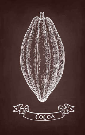 Cocoa pod. Chalk sketch on blackboard background. Hand drawn vector illustration. Retro style.