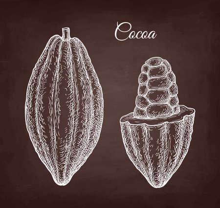 Cocoa pod. Chalk sketch on blackboard background. Hand drawn vector illustration. Retro style.