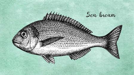Croquis à l'encre de dorade à tête dorée. Illustration vectorielle dessinés à la main de poisson sur fond de papier ancien. Style rétro.