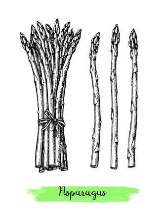 Croquis à l'encre d'asperges. Isolé sur fond blanc. Illustration vectorielle dessinés à la main. Style rétro.