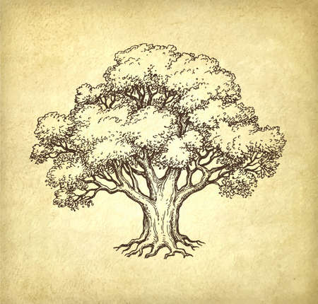 Ink sketch of oak tree. Hand drawn vector illustration on old paper background. Retro style.