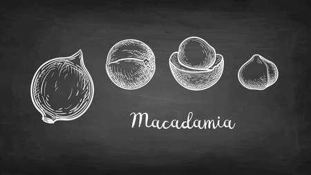Chalk sketch of Macadamia.