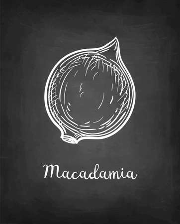 Chalk sketch of Macadamia.