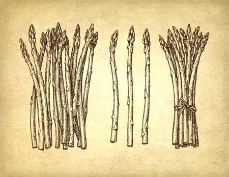 Ink sketch of asparagus.