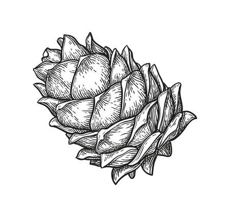 Ink sketch of pine cone. Banque d'images - 117271839