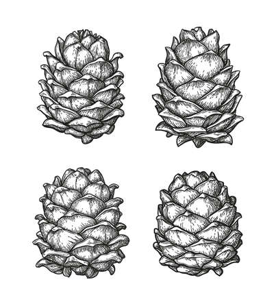 Ink sketch of pine cones. Иллюстрация