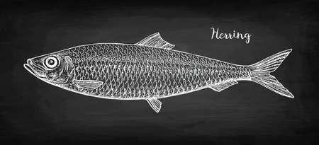 Chalk sketch of herring on blackboard background. Hand drawn vector illustration. Retro style.