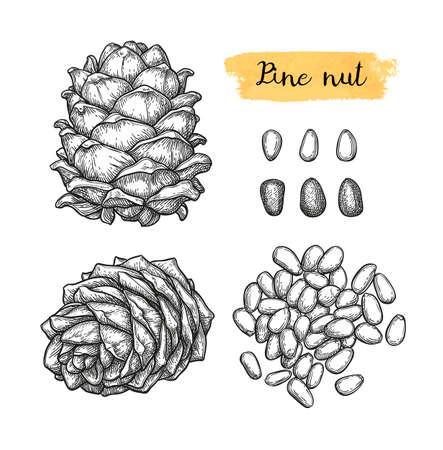 Ink sketch of pine nut. Banque d'images - 117271976