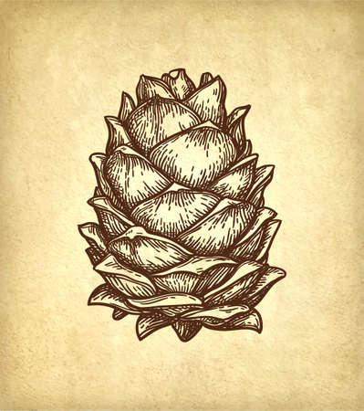 Ink sketch of pine nut. Ilustração