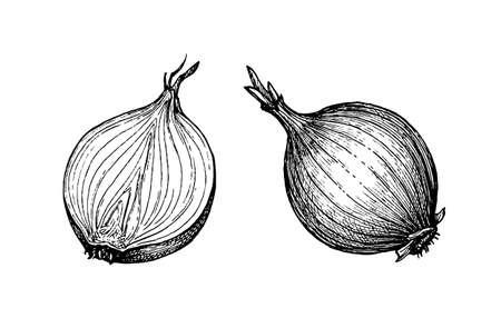 Croquis à l'encre d'oignon isolé sur fond blanc. Illustration vectorielle dessinés à la main. Style rétro. Vecteurs