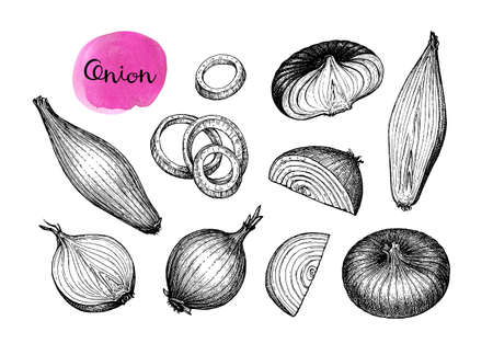 Ink sketch of onion isolated on white background. Hand drawn vector illustration. Retro style. 版權商用圖片 - 125868911