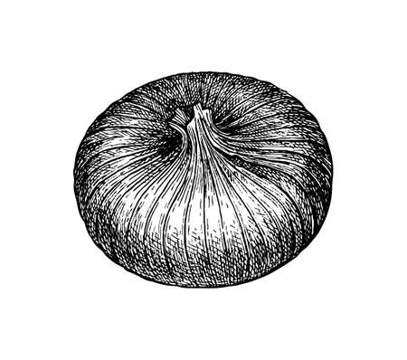 Ink sketch of onion isolated on white background. Hand drawn vector illustration. Retro style. Ilustração