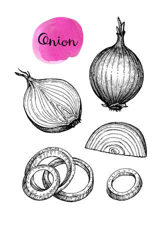Ink sketch of onion. Stock Illustratie