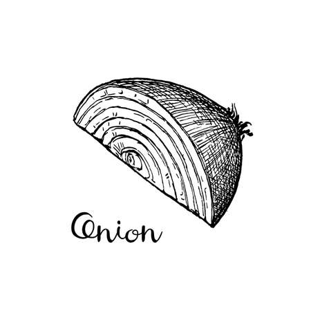 Ink sketch of onion isolated on white background. Hand drawn vector illustration. Retro style. Ilustração