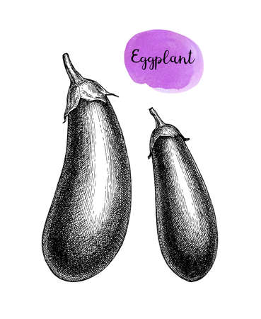 Ink sketch of eggplant isolated on white background. Hand drawn vector illustration. Retro style