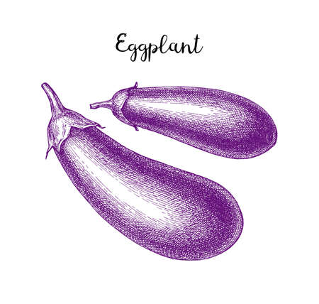 Ink sketch of eggplant isolated on white background. Hand drawn vector illustration. Retro style.