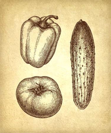 Vegetables set. Ink sketch on old paper background. Hand drawn vector illustration. Retro style.