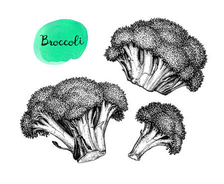 Ink sketch of broccoli isolated on white background. Hand drawn vector illustration. Retro style Illusztráció