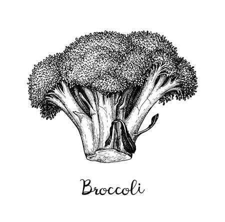 Croquis à l'encre de brocoli isolé sur fond blanc. Illustration vectorielle dessinés à la main. Style rétro