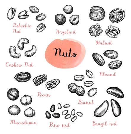 Nuts big set. Collection of ink sketches isolated on white background. Hand drawn vector illustration. Retro style.