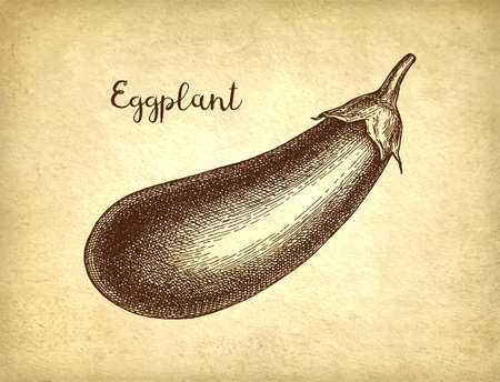 Ink sketch of eggplant on old paper background. Hand drawn vector illustration. Retro style.