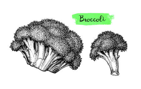 Ink sketch of broccoli isolated on white background. Hand drawn vector illustration. Retro style  イラスト・ベクター素材