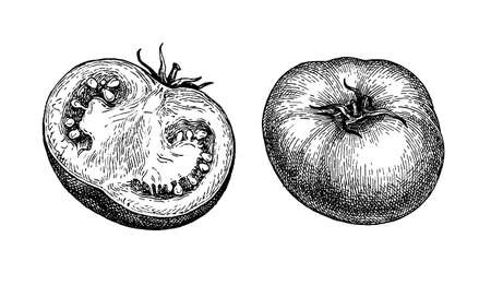 Ink sketch of tomatoes isolated on white background. Hand drawn vector illustration. Retro style.