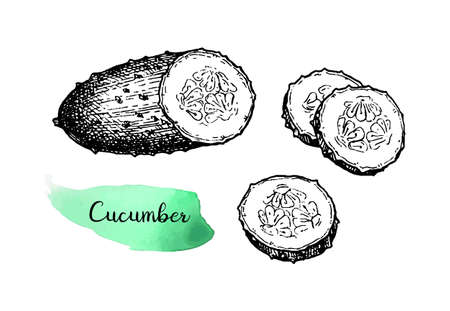 Ink sketch of cucumber isolated on white background. Hand drawn vector illustration. Retro style. Imagens - 125360793