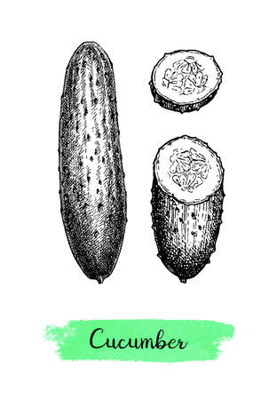 Ink sketch of cucumber isolated on white background. Hand drawn vector illustration. Retro style.