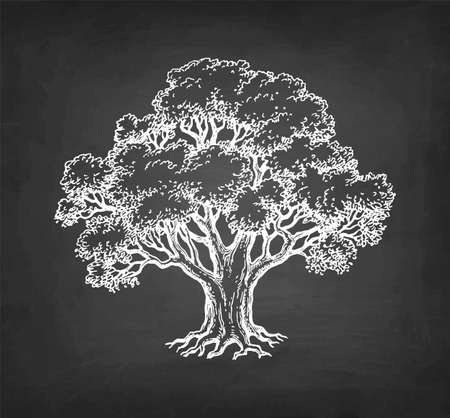 Chalk sketch of oak tree on blackboard background. Hand drawn vector illustration. Retro style.
