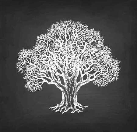 Dibujo de tiza de roble sin hojas.