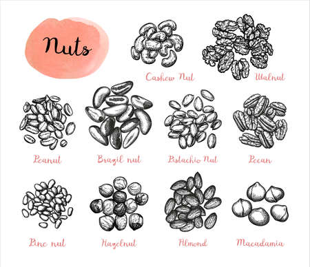 Nuts big set. Collection of ink sketches isolated on white background. Hand drawn vector illustration. Retro style. Stock fotó - 125223135