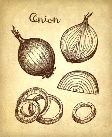 Ink sketch of onion on old paper background. Hand drawn vector illustration. Retro style. 版權商用圖片 - 125223145