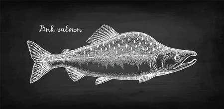 Croquis à la craie de saumon rose (à bosse) sur fond de tableau noir. Illustration vectorielle dessinés à la main de poisson. Style rétro.