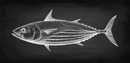 Chalk sketch of skipjack tuna on blackboard background. Hand drawn vector illustration of fish. Retro style.