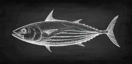 Croquis à la craie de listao sur fond de tableau noir. Illustration vectorielle dessinés à la main de poisson. Style rétro. Vecteurs
