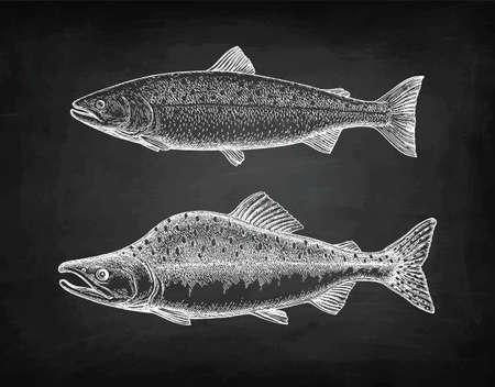 Croquis à la craie de saumon rose. Vecteurs